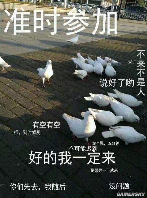 鸽.jpg